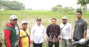 Pantau Lahan Pertanian Terdampak Banjir, Dispertahortbun Sumenep Fasilitasi Klaim Asuransi Petani